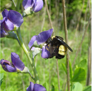 NRCS handbook Bee photo